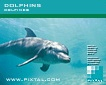 Dolphins (CD066)