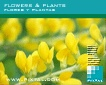 Flowers & plants (CD073)