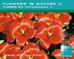 Flowers in Nature II (CD077)
