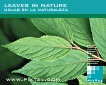 Leaves in Nature (CD192)
