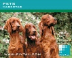 Pets (CD196)