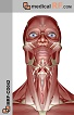 The Muscles of the Head and Neck Realistic 1 (MED-MRFCD042)