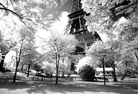 Eiffel Tower. Paris. France
