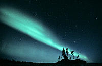 Northern Lights (aurora borealis) with tree silhouettes, Northwest Territories, Canada