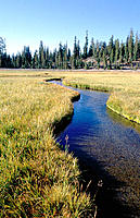 Kings Creek Meadow. Lassen Volcanic NP. California. USA
