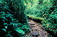 Trail. Monteverde Cloud Forest Preserve. Costa Rica