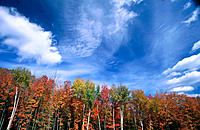 Trees in Fall. Catskill Mountains. New York. USA