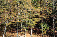Forest. Pyrenees Mountains. Spain