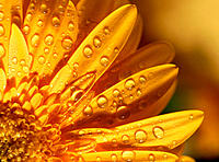 Waterdrops on flower