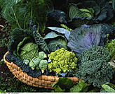 Basket, Cabbage, Vegetable