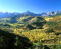 Aspen trees at mountains in fall colors. Colorado. USA