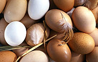 Eggs, white, brown