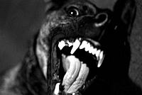 Close-up snarling dog
