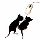 Kittens and mouse