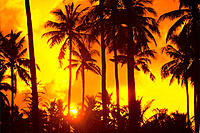 Palm trees silhouetted in bright orange sky, sunset