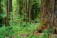 WA, Olympic National Park, Hikers on trail in Hoh Rainforest