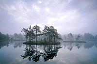 Morning mist on small lake with pine forrest on island in marshlands. Västmanland, Sweden.