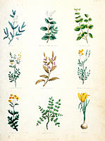 Medicinal herbs. Historical illustration of a selection of medicinal plants, taken from Thomas Kelly´s 1850 publication of The Complete Herbal by Nich...