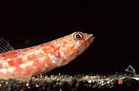 Fish. Boracay Island. Philippines