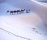Camel train at Merzouga desert. Morocco