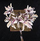 Wild Orchid Blossom, by John Bunker, Acrylic and gold leaf on tile, 1997, 20th Century