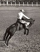 Rear view of a cowboy riding a bucking horse at a rodeo, Ellensburg, Washington, USA