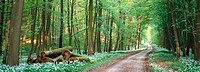Forest in spring. Germany