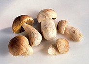 Fresh Cep Mushrooms