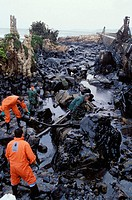 Fuel spill ('chapapote') of Prestige tanker. Dec. 2002. Galicia. Spain