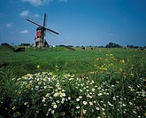 10631849, flowers, Holland, Hoogmade, cows, cow´s stoves, scenery, Netherlands, meadows, windmill, landmark,