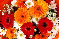 Three Red Gerbera, Four Orange Gerbera, White Chrysanthemum, White Flowers