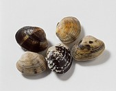Five clams