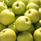 Green Golden Delicious apples (filling the picture)