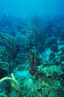 CREDIT: DOUG ALLAN/SCIENCE PHOTO LIBRARY Corals on the seabed. Corals are tiny organisms that build tough structures around themselves for protect...