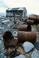 Gentoo penguins (Pygoscelis papua) nesting in the ruins of an abandoned Antarctic research station. Gentoo penguins normally lay two eggs in early spr...