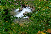 Irati River. Irati Forest. Navarre. Spain (thumbnail)