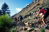 Mountain bikers and a dog