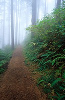 Trail through old growth forest at Cape Lookout State Park. Oregon. USA
