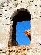 Dogs. Lagia village on Mani Peninsula. Laconia, Peloponnese. Greece