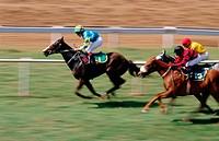 Horse racing. Mahalaxmi racecourse. Mumbai. Bombay. Maharashtra. India