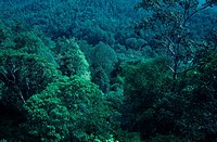 Forest in Endau-Rompin, Malaysia