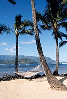 ´Beach with palm trees and a hammock.  Photographed on the island of Kauai, Hawaii.