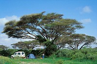 Camping under a acacia tree in the Amboseli National Park, Kenya