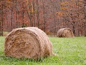 Hay bales in autumn field. Appalachian foothills, Southeast Ohio. USA