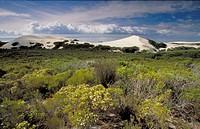 Fynbos habitat conservation area.