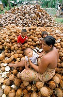 ´Sea Gypsies´ processing coconuts for coprah. Phuket Island. Thailand