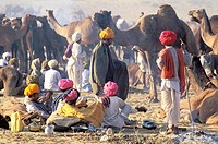 November camel fair. Pushkar. Rajasthan. India