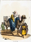 Vignette from a lithographic plate showing men travelling across the desert on camels. Taken from ´The Camel´ in ´Graphic Illustrations of Animals - s...