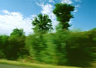 Trees on side of road, blurry