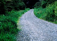 Narrow gravel road through woods